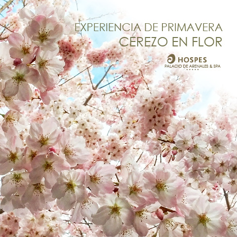 Expérience Printemps Cerisiers en Fleur