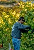 """EXPERIENCIA CULTURAL: """"Denominación Origen La Rioja"""""""